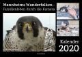 Mannheims Wanderfalken – Familienleben durch die Kamera